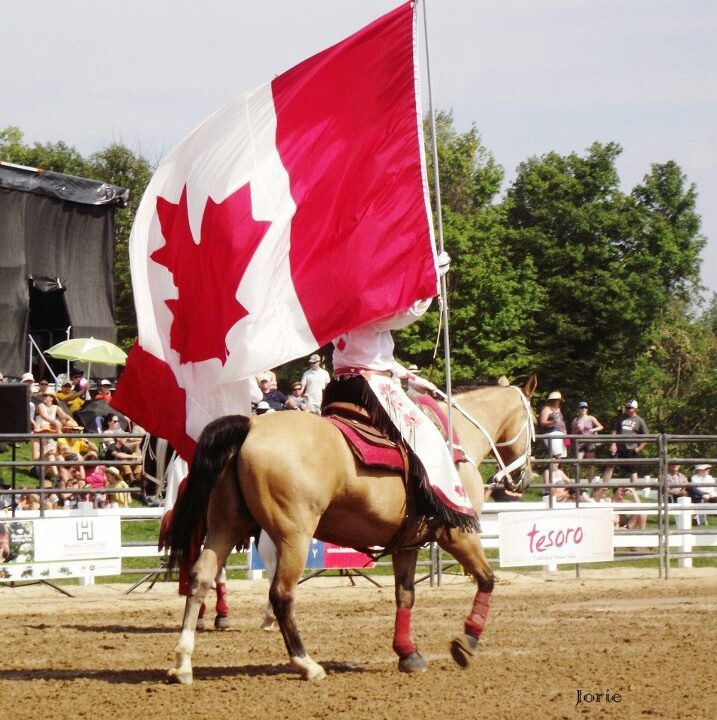 Canada, canadian cowgirl, horse