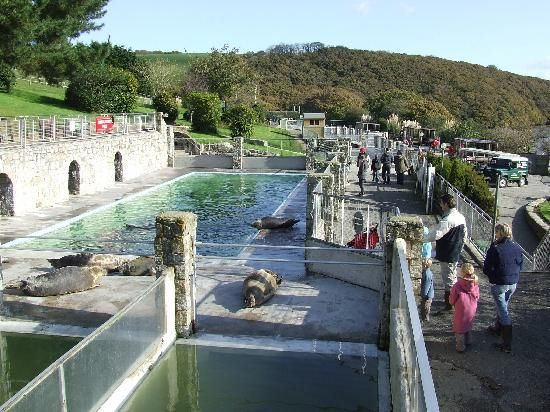 Cornish seal sanctuary in Gweek, Helston.