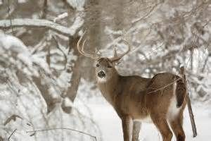 Numbers trending downward in Ohio deer hunting kills #numbers #trending #downward #hunting #kills