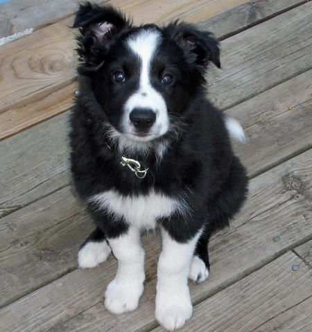 She almost always had one ear up and one ear down.  This picture reminds me of how she looked as a puppy.