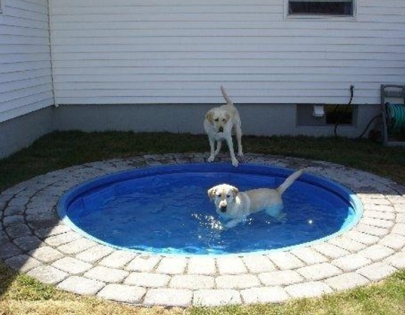 Doggie Pond: place a kiddie pool in the ground that way it's a lot prettier plus big dogs can't chew on it or drag it across the yard