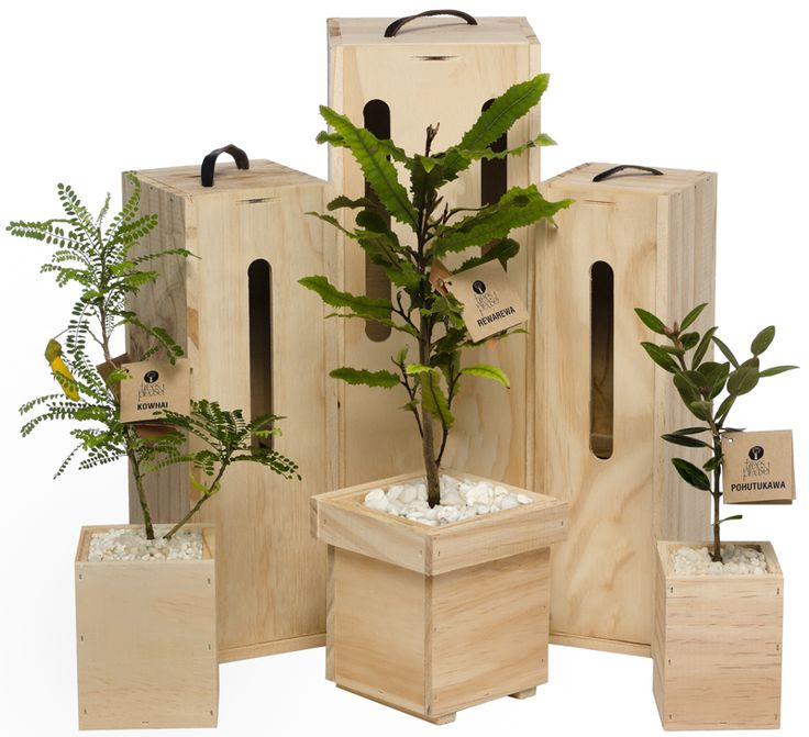 Beautifully boxed tree gift - fruiting, flowering and NZ native trees by Trees Please! Choice of sizes, branding available
