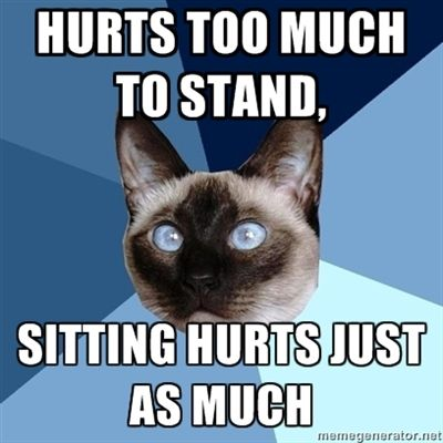 everything hurts, it's just deciding which hurt you prefer at the moment. chronic illness cat