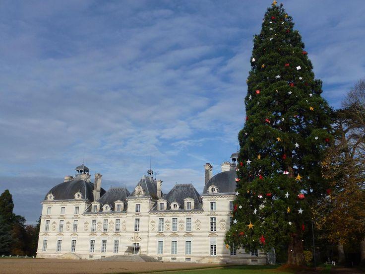 Le plus grand sapin de Noël naturel d'Europe au Château de Cheverny