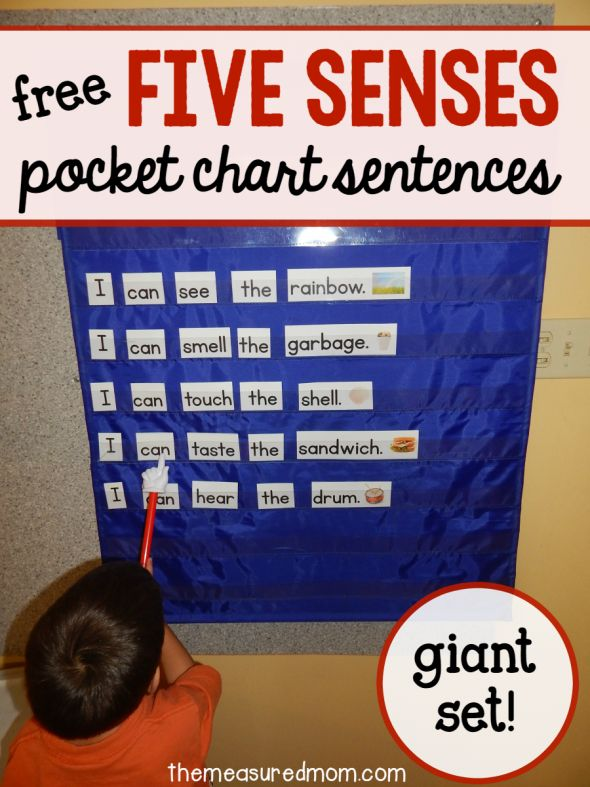 Love this five senses activity for preschool, kindergarten, and first grade! Great pocket chart idea.