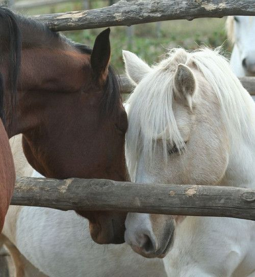 ♥: Best Friends, Beautiful Hors, Hors Always, Out 3, New Friends, Hors Beautiful, Hors Nothings, Horses Love, Off Off Off