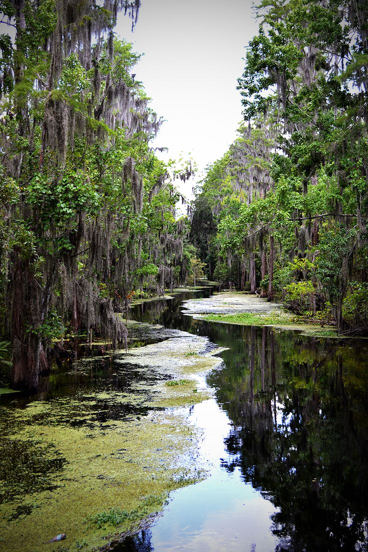 The Florida Everglades| Serafini Amelia|  The Everglades - South Florida.