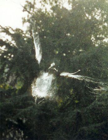 Vensters zijn soms onzichtbare objecten voor vogels. Hoe voorkomen dat ze ertegen vliegen?