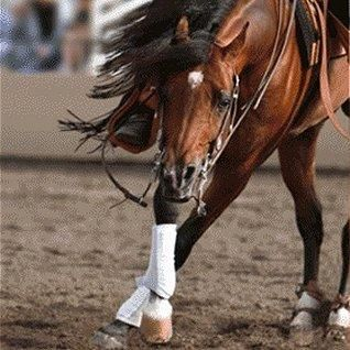 Reining horse -- The spin. This horse has a nice crossover in the front going into the spin.