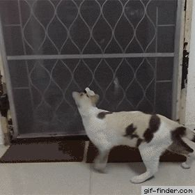 Cat Lets Herself In | Gif Finder – Find and Share funny animated gifs