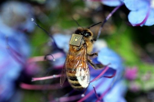 5,000 Honey Bees to be Equipped with Sensors to Study Colony Decline  Read more: 5,000 Honey Bees to be Equipped with Sensors to Study Colony Decline | Inhabitat - Sustainable Design Innovation, Eco Architecture, Green Building