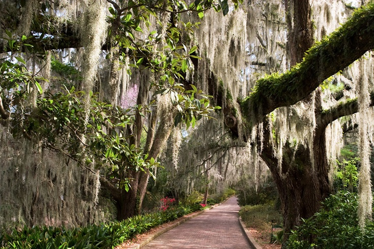 Image result for paisajes de tallahassee