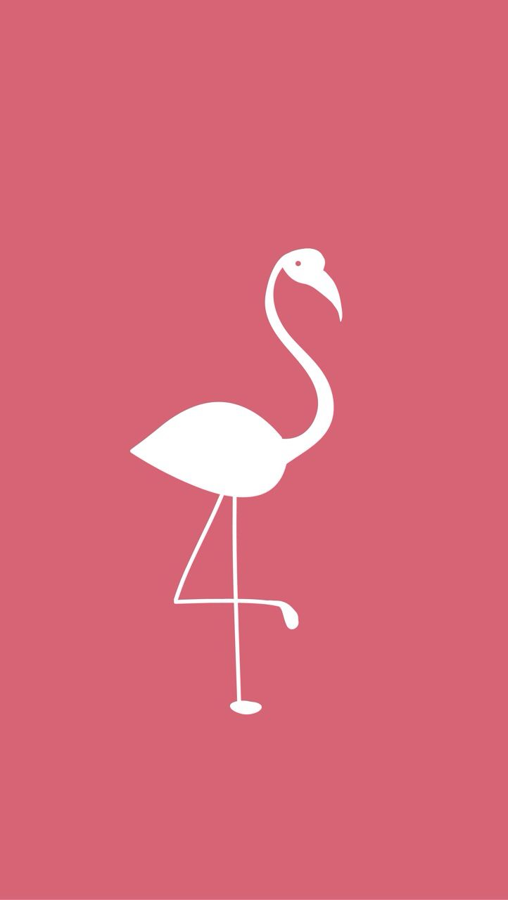K HD Two flamingos Wallpapers Images