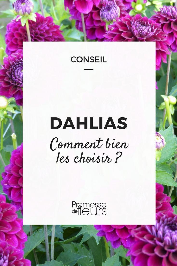 Comment bien choisir ses dahlias | Massif fleurs, Astuce ...