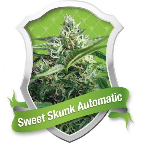 """Sweet Skunk Automatic est très semblable à la populaire variété espagnole Green Poison, mais est auto-florissante et peut donc être cultivée pratiquement partout. Cette nouvelle variété est un fantastique croisement entre la variété clone """"élite"""" Green Poison et l'auto-florissante Big Devil #2, rétro-croisée et stabilisée pendant quelques générations de façon à perfectionner l'hybride."""