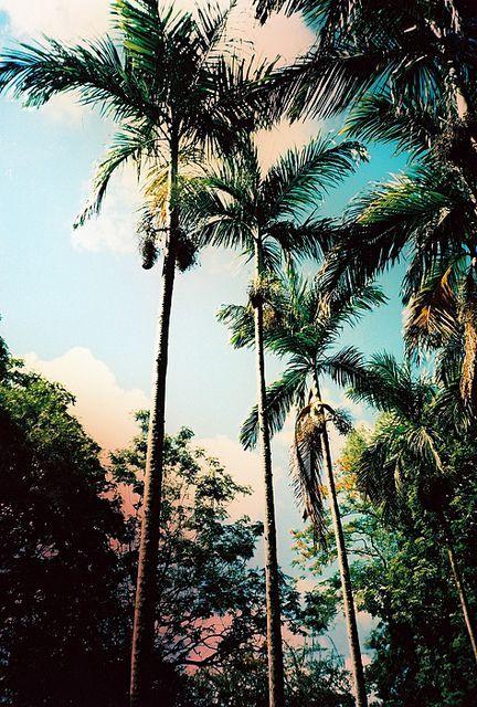 Trees, skies and island vibes
