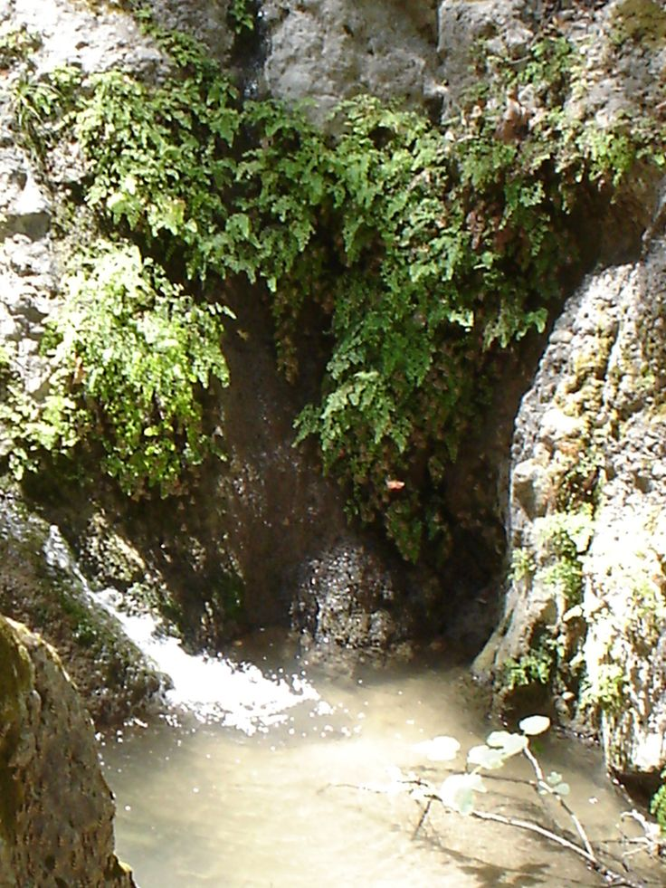The Flowing River Deep In The Forest Of The Butterfly Valley In Rhodes