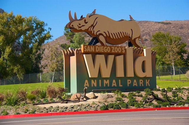 Wild Animal Park - San Diego, CA  ....now that was an awesome field trip I got to go on with Taylor :)