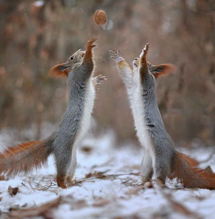 nutball by Vadim Trunov on 500px