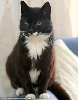 Creme Puff a female cat who died at age 38 years and 3 days. She was the oldest cat ever recorded, according to the 2010 edition of Guinness World Records.