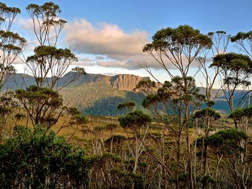 On the Overland Track through Pinestone Valley on Tasmania, one can see Cathedral Mountain through a eucalyptus forest.
