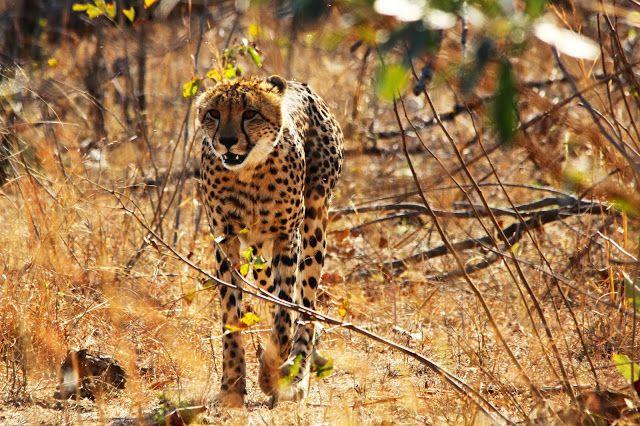 Os melhores Parques Nacionais de África para observar Vida Selvagem