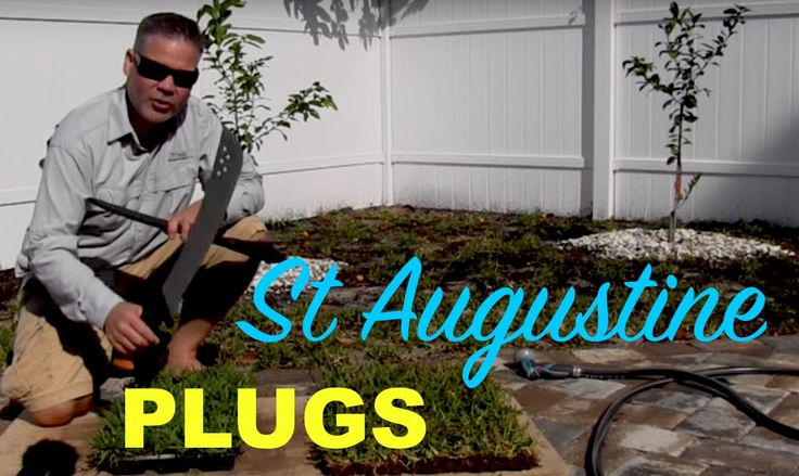 Creating St Augustine Grass Plugs From Sod :: Palmetto St Augustine