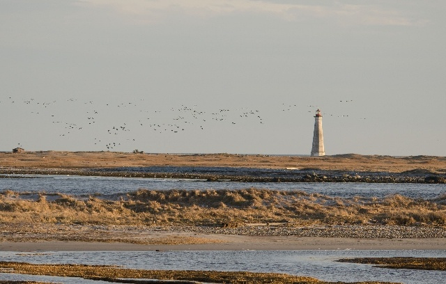 Cape Sable Lighthouse, accessible by boat from Cape Sable Island, is in need of major repairs and painting. My company is acting as the online fundraising arm for the Friends of the Cape Sable Light. For more, please go to http://www.capesablelight.com , or look for us on Facebook. (Photo by Ron D'Entremont)