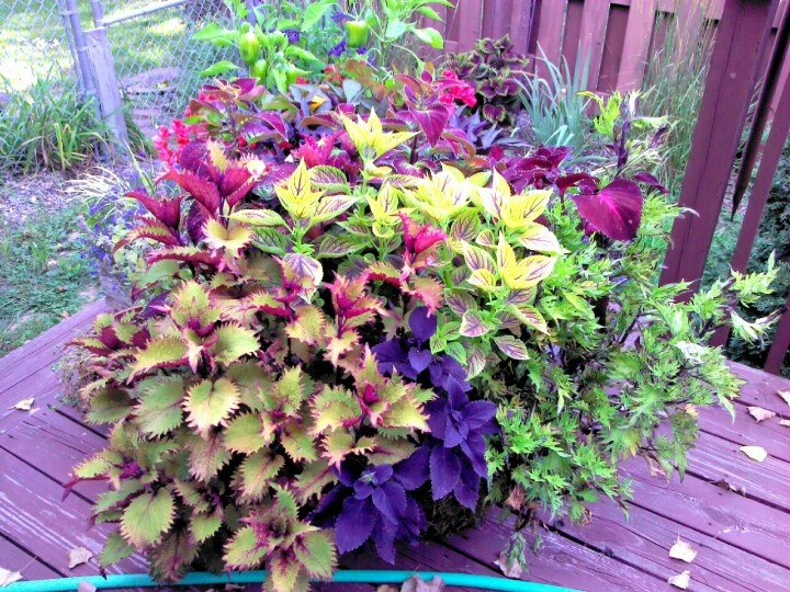 17 Best Images About Summer Planters On Pinterest | Container Gardening Summer And Plants