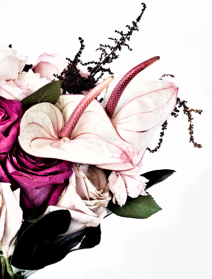 Amazing bouquet featuring antherium, roses, peonies and amaranthus. The perfect artwork to remember a beautiful bouquet. Floragraphica | Modern bouquet preservation with photography