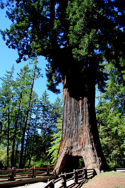 Kitschy Roadside Tourist Attractions in the Northern California Redwoods