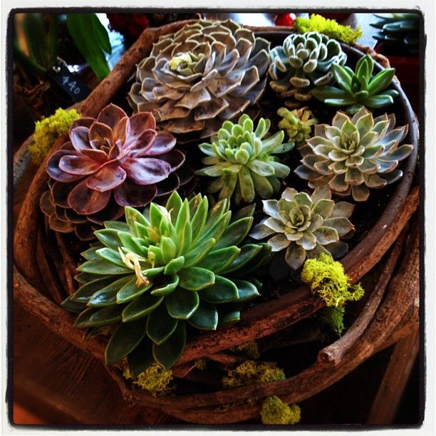 """{ Spectacular Succulents }"""