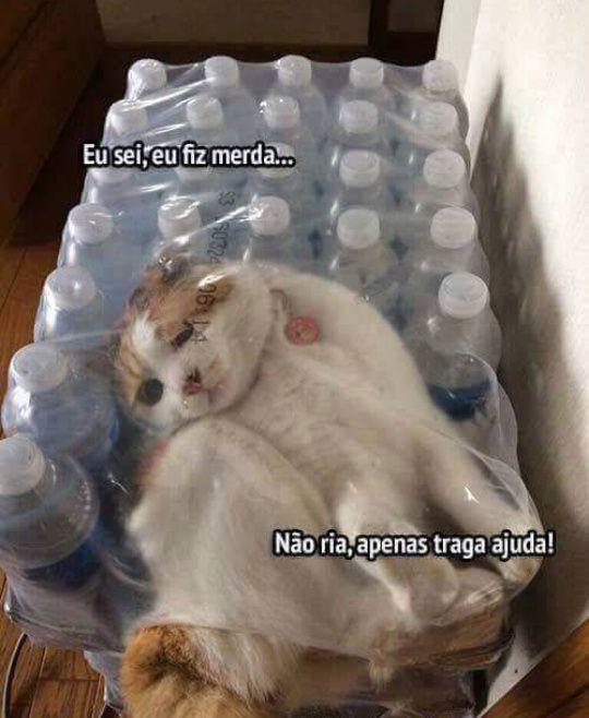 meme-gato-encrencado