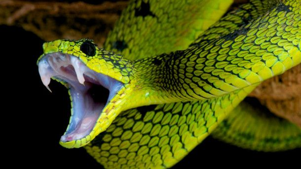 Facing an anti-venom shortage, WHO tries to mobilise new suppliers