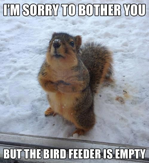 It's funny because Matt has to shoo off this one greedy squirrel who always steals from our gluttonous birds.