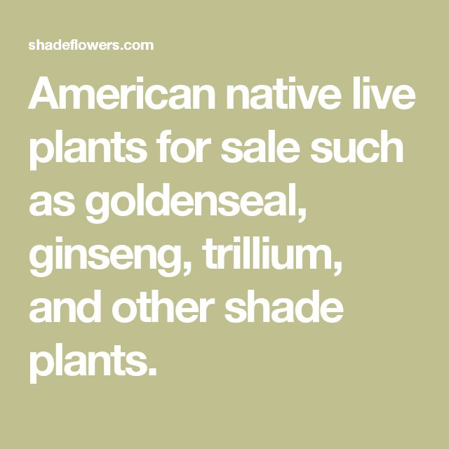 American native live plants for sale such as goldenseal, ginseng, trillium, and other shade plants.