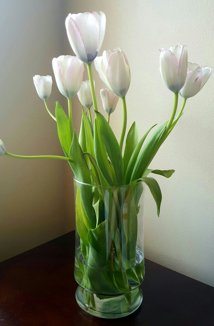 White with light pink border tulips
