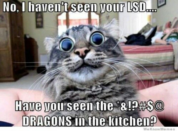 Funny Cat Meme ~ P.S., LSD is a drug that makes you crazy and makes you have crazy hallucinations...