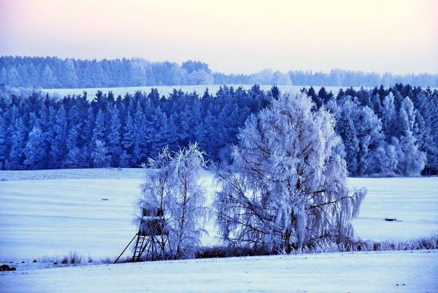 GREAT HUNTING: Myslivecký posed v zimní krajině je opuštěný