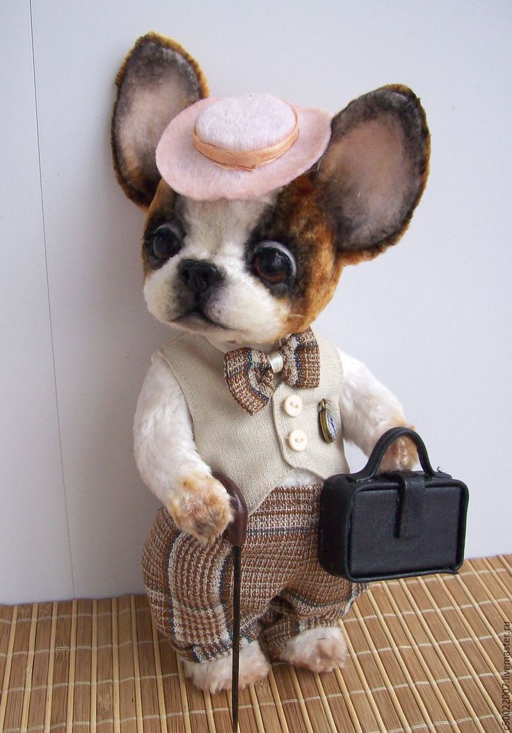 Купить Боб - белый, бульдог, бульдожка, бульдог тедди, французский бульдог, собака, собака игрушка