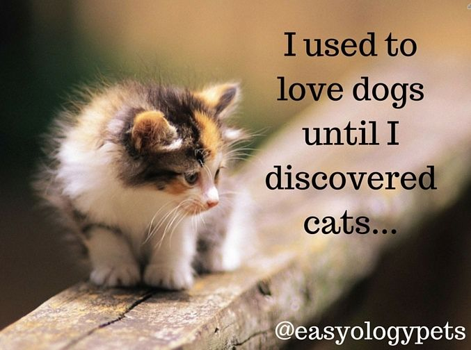Cat Quotes Glamorous 123 Best Cat Quotes & Truths Images On Pinterest  Kitty Cats Crazy