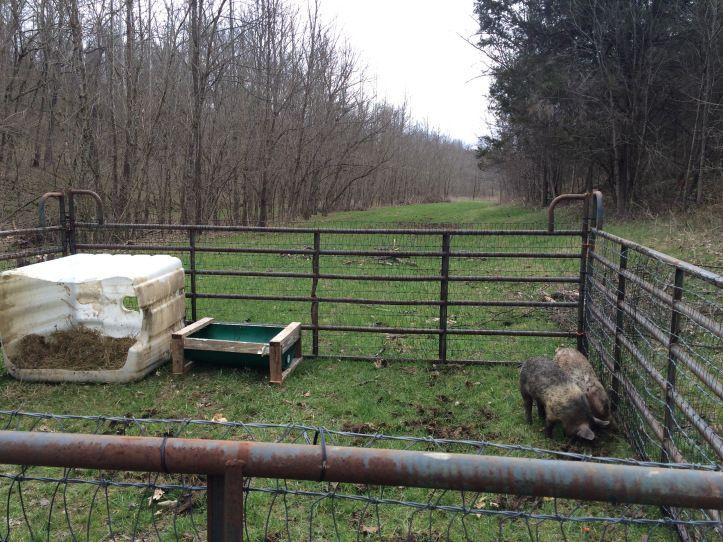 Best ideas about cattle panels on pinterest
