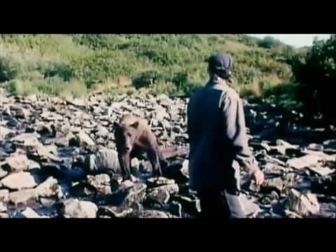Grizzly Man (2005) - Movie | Moviefone