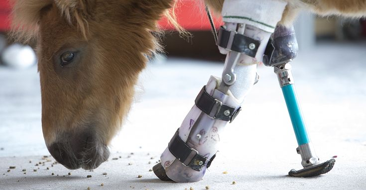 Handicapped animals are getting a second live thanks to remarkable advocate