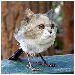 Cat Bird