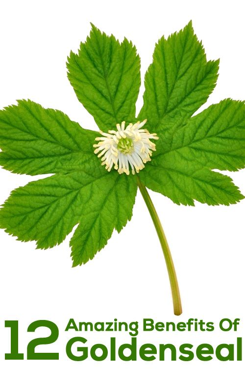 12 Amazing Benefits Of Goldenseal For Skin