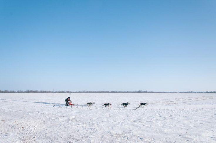 💡 Snow sledge dogs transport - new photo at Avopix.com    🏁 https://avopix.com/photo/43437-snow-sledge-dogs-transport    #beach #ocean #sand #sea #sandbar #avopix #free #photos #public #domain