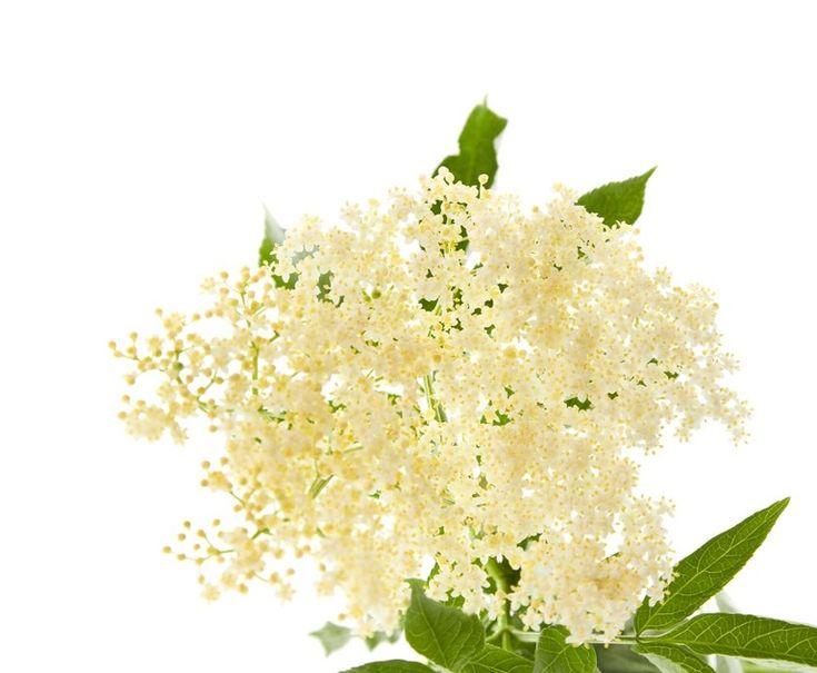 Olej z kwiatów czarnego bzu: przepis i zastowanie