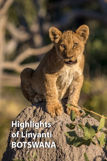 The Linyanti area of Botswana is a remote area of floodplains and woodland, a place to see elephants, big cats and wild dog. Find out what else makes it special.