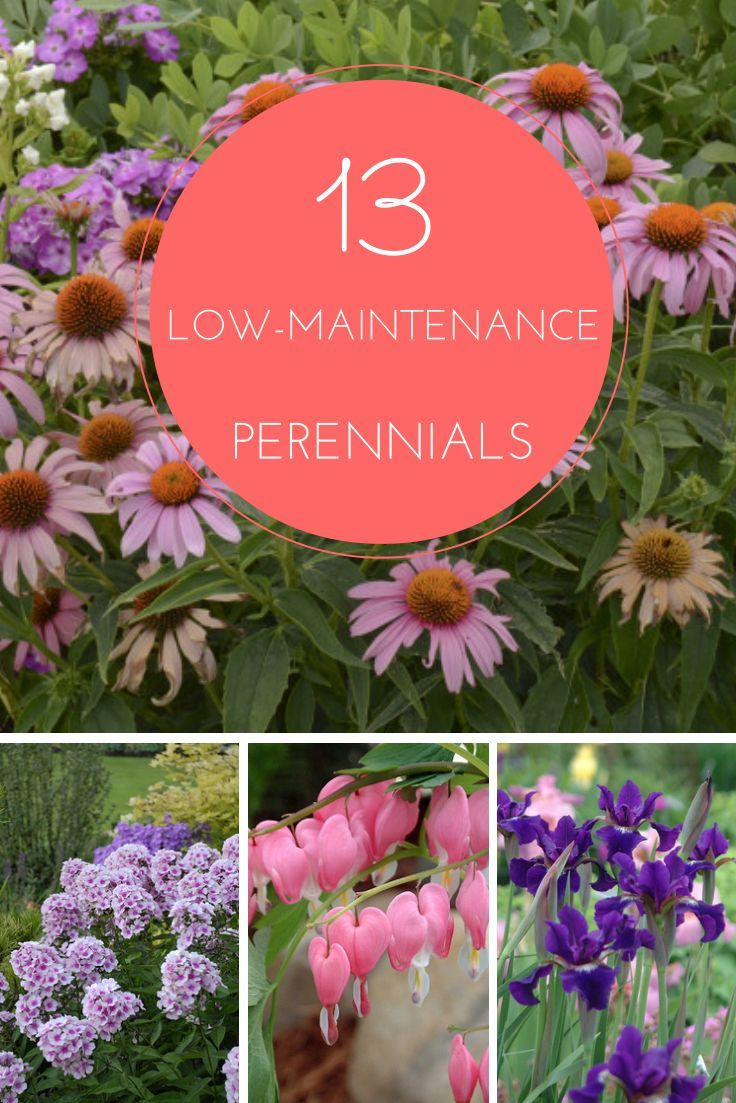 45 best front of home landscape designs images on for Low maintenance perennial flower bed